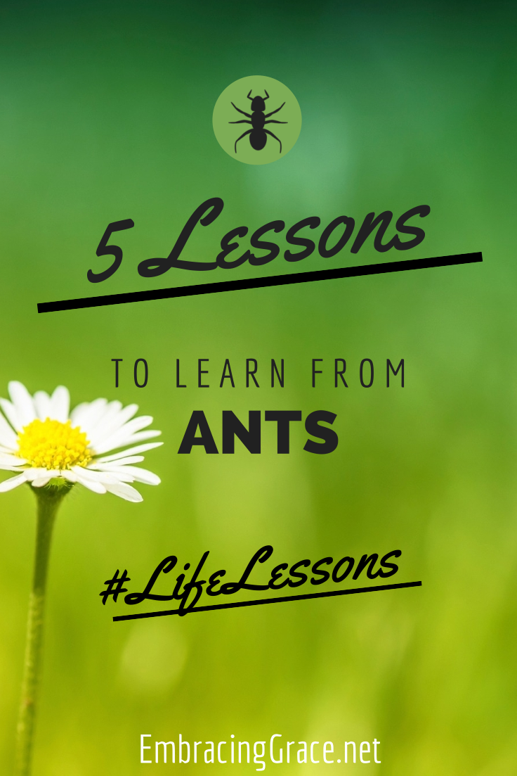 5 lessons to learn from ants!